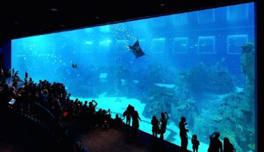 シンガポールの水族館 シーアクアリウムを徹底攻略!チケット割引情報・アクセス・所要時間もご紹介!